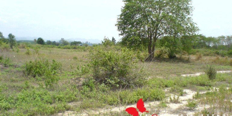 Land View4